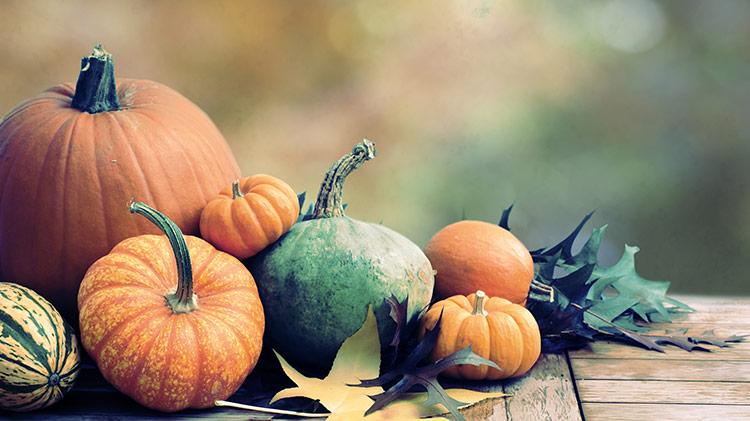 Ludwigsburg: Pumpkin Festival